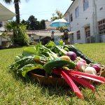 外遊びと新鮮野菜